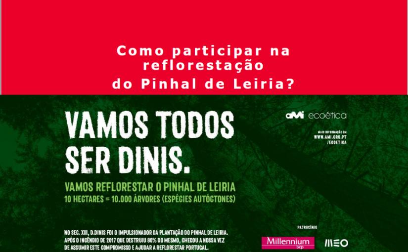 Recuperação do Pinhal de Leiria
